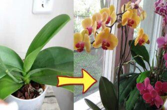Підживлення для орхідеї - як заставити рослину цвісти