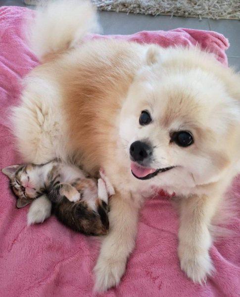 Два нерозлучника: котик і песик. Ходять один за одним хвостом